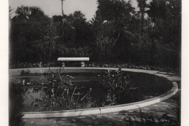 Pond with bench
